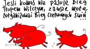 Bieg czerwonych świń
